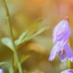 超環境音。 鳥の鳴き声だけが延々と流れるサイト『Birdsong.fm』