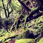 2012/10/16 世界遺産 屋久島の旅 – day2 白谷雲水峡