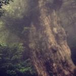 2012/10/18 世界遺産 屋久島の旅 – day4 縄文杉