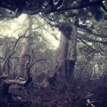 【屋久島】「花山歩道」をついに踏破!無名の大樹が乱立するディープすぎる登山道